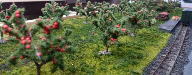Apfelbaumweide