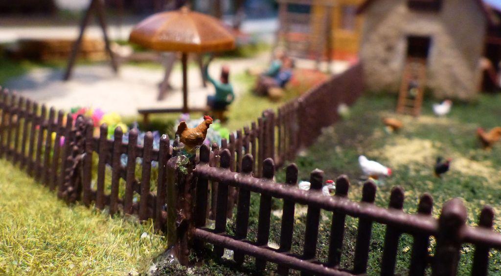 Hahn auf dem Zaun